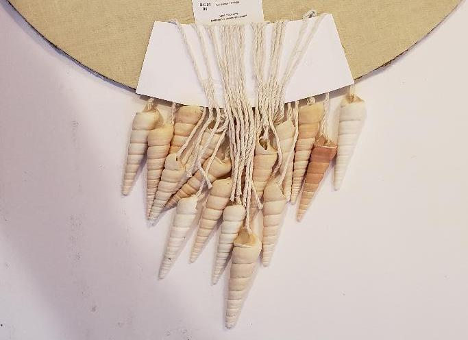 seashell clock 1