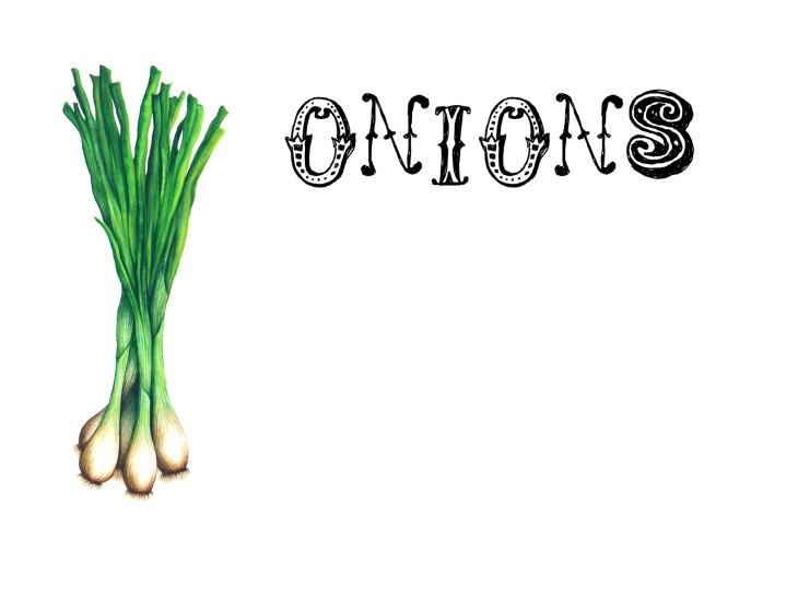 onion printout photo for pdf