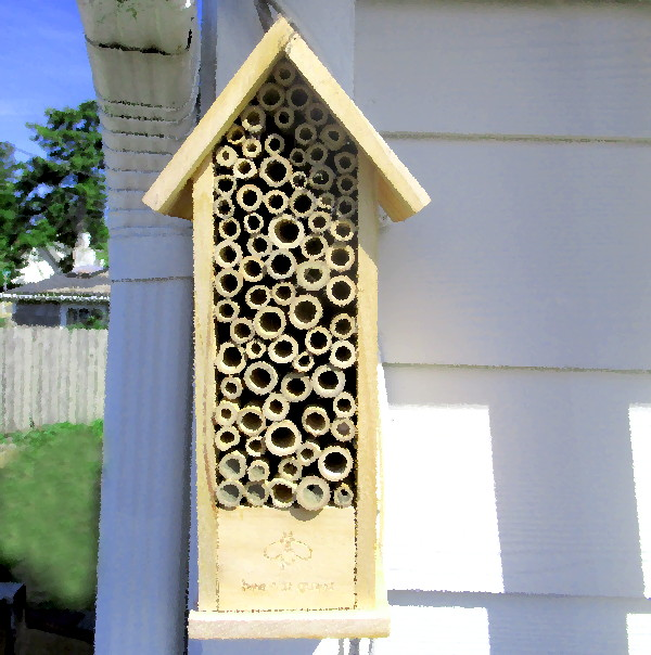 bee house feature