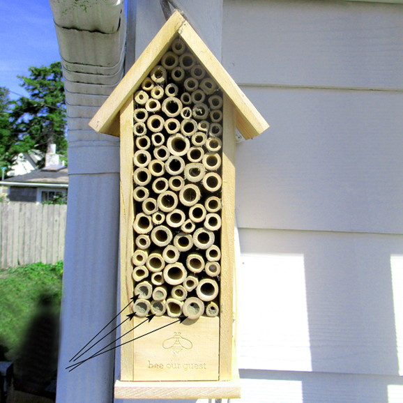 bee house occupation