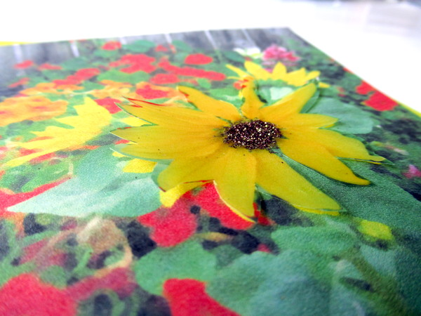 card sunflower closeup