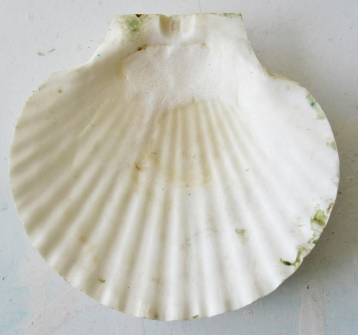 dreaming of the sea shell